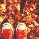 Programme de l'accueil de loisirs pour les vacances d'automne !